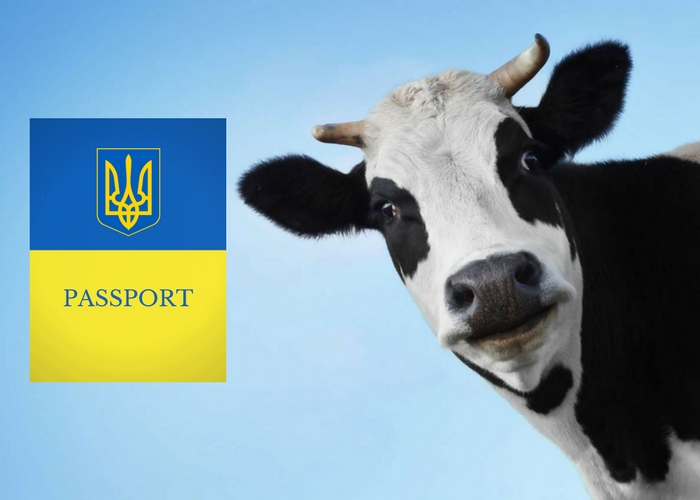 Animals with a passport: an electronic passport for livestock, what is it for?